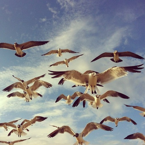 gavioterio :o #seagull #rockaway  (Taken with Instagram)