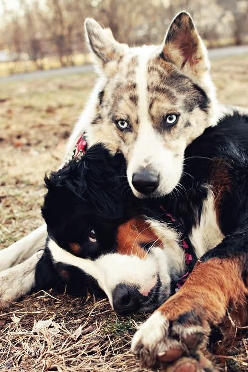 adore-theworld:  earthlynation:  buddies by source  Oh goodness, want them both