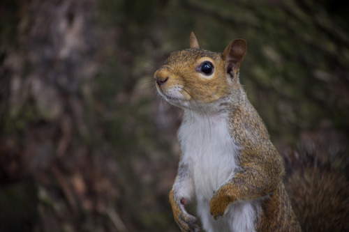 ".0001% Chance Squirrel Could Be Republican Nominee, Say Analysts Though the Republican National Convention is already upon us, analysts at the Hastings Institute for Political Science have repeatedly noted that there's a chance — albeit infinitesimally small — that a squirrel named Conrad could become the party's nominee in Tampa, FL. ""His name was added to some RNC forms back in June,"" says Francis Overmeyer. ""It's highly likely that Romney will be the party's nominee, but we suspect there's a .0001% chance that Conrad the squirrel could cause an upset."" While this outcome would certainly complicate Republican strategy for the November election, Conrad does poll slightly higher than Romney in the crucial swing state of Ohio. Via Steven Guzzardi."