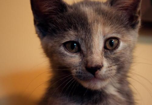 thefluffingtonpost:  PHOTO OP: Kitty Portrait Via ungh.