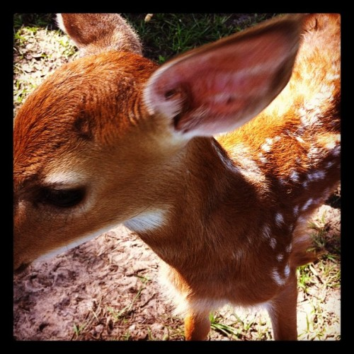 #baby #doe isn't she a #cutie!? (Taken with Instagram)
