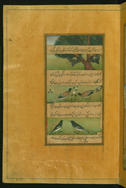 Illuminated Manuscript Baburnama, Walters Art Museum ms. W.596, fol.29a (by Walters Art Museum Illuminated Manuscripts)