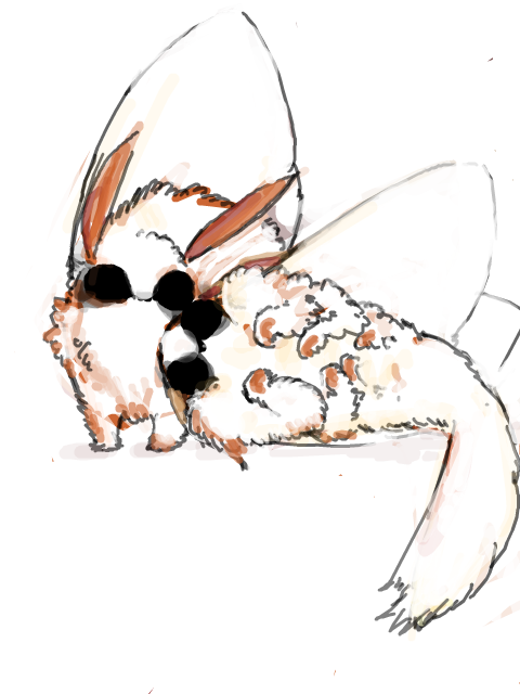 inkdops:  T. sparshalli moth doodle BECAUSE THEY LOOK LIKE TINY FLOOFY WHITE FOXES