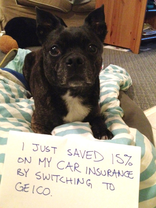 daveshumka:  BOOM! I just figured out how to monetize Dog-Shaming.  Nice work Grandpa!