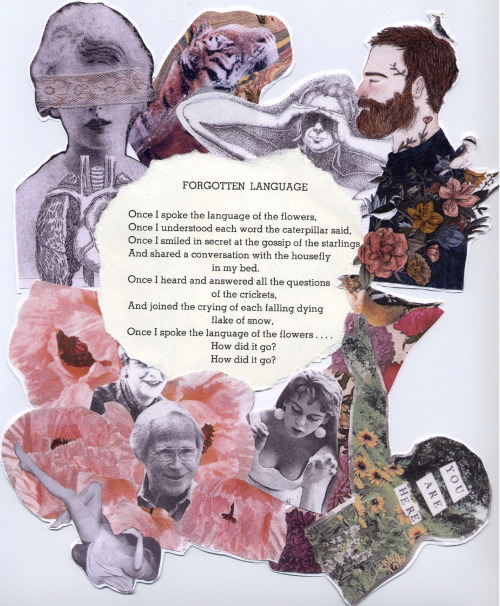 Forgotten Language by Shel Silverstein Collage