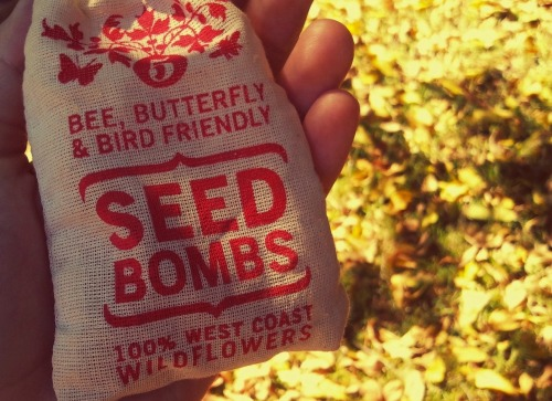 planted these seedbombs today… . ✿