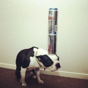 Cute! #notmine #cute #lol #dogs #can #heavy #funny #fun