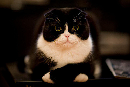 This cat couldn't be more disappointed in you.