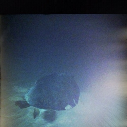 So excited to see a Sea turtle seen on a midnight beach walk! #cancun @cancuncvb (Taken with Instagram at Hard Rock Hotel)