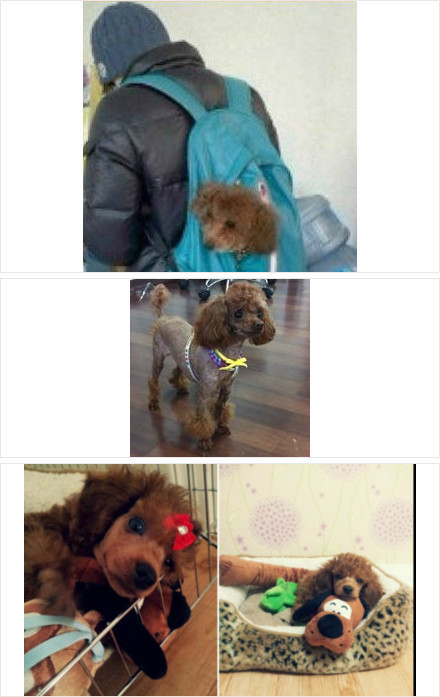 exowhore:  predebut-exo:  Predebut Kai and his dogs  who stuffs their dog in their backpack seriously