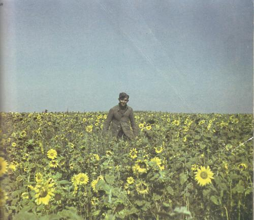 Young German soldier in a sunflower field in Ukraine