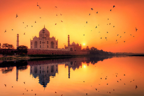 dudedoesyoga:  Taj Mahal, Sunset by Michele F. on Flickr.