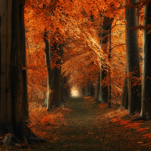 symphony-of-the-elements:  The way Home by =Oer-Wout