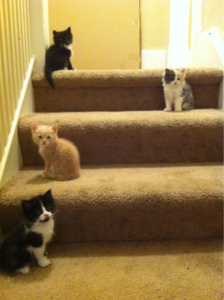 setbabiesonfire:  if i'm elected president there will be a kitten on every step across america