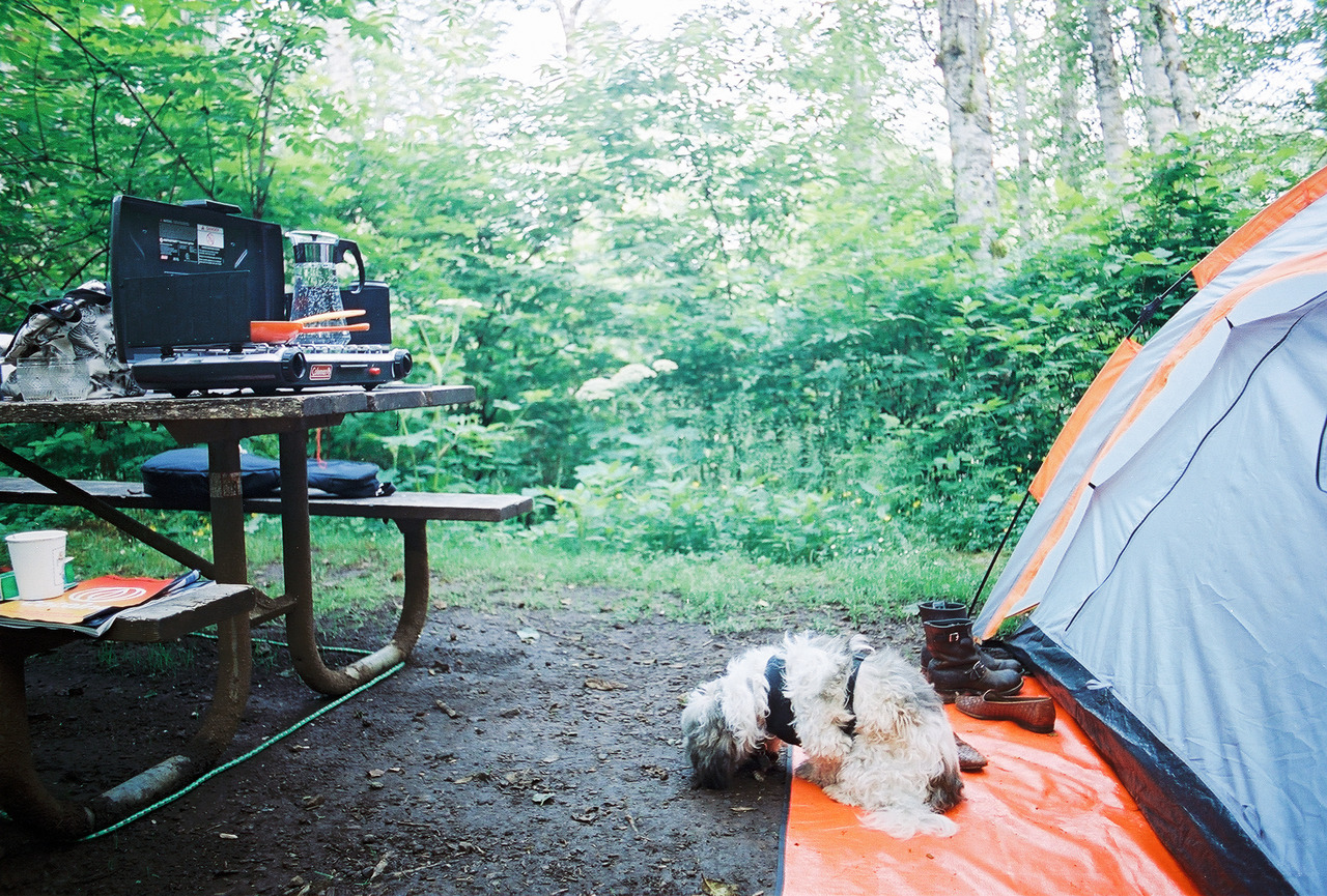 intrepider:  camp dog // Saddle Mountain