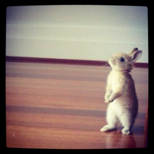"thefluffingtonpost:  Rabbit Calls for End to Political Mudslinging With the U.S. presidential election just over two months away, one bunny has had enough of the partisan attacks. The rabbit, Toby Bun Bun, thinks that the Obama and Romney campaigns have grown increasingly nasty, especially with so-called SuperPACs on each side pouring an almost unlimited amount of money into slamming the other side. ""Mr. Bun Bun just wants a return to the issues,"" said Melanie Wyndham, a spokesperson for the concerned bunny.  ""When campaigns turn to negative ads and personal attacks, the electorate loses.  Mr. Bun Bun wants both candidates and parties to swear to run a clean campaign from here to Election Day, and to publicly urge SuperPACs to follow suit."" Via missy_j78."