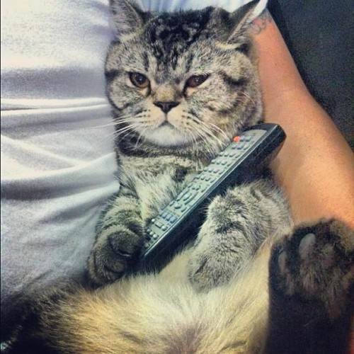 "thefluffingtonpost:  Kitty Watches 'Law & Order: SVU' Marathon All Day A kitty named Winston has reportedly spent the entire day watching a Law & Order: SVU marathon on the USA television network. ""He's seen every episode on Netflix already,"" said James Taber, a source close to the situation, ""but he still watches any time they have a marathon… which seems to be like every day.  That show is always on.  Anyway, can we wrap this up?  There's another episode starting."" Via memphismikko.  Spirit animal"