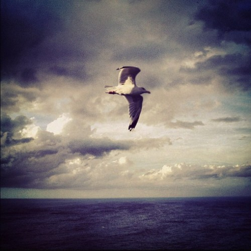 showstudio:  Seagull. North Cornish coast.#seagull #cornwall (Taken with Instagram)