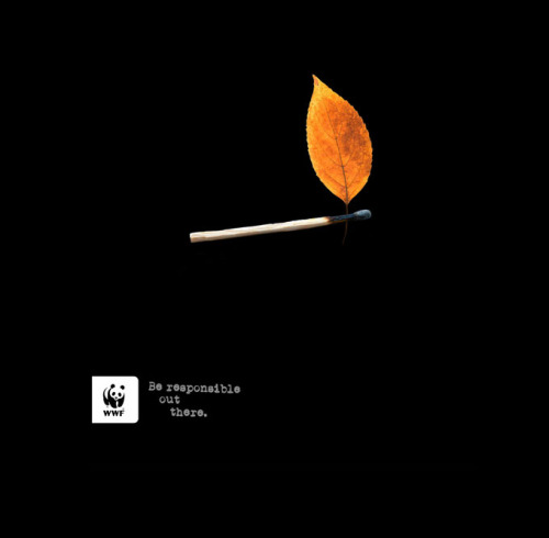 jaymug:  WWF - Be responsible cut there