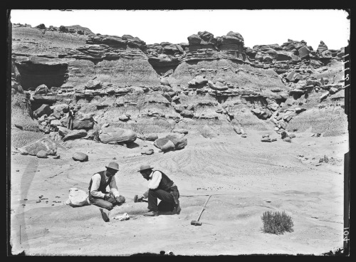 From the archives: A discovery is made in Utah, 1895Explore all the photos from the Picturing the Museum collection here: http://bit.ly/l8nOsp© AMNH Library/Image #17727