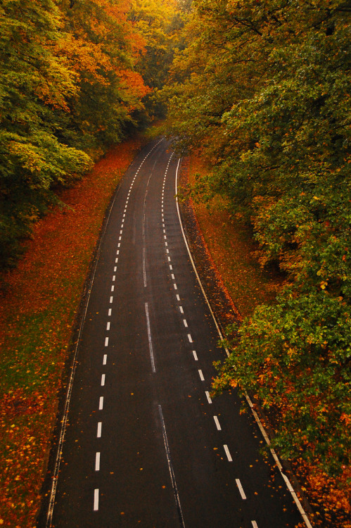throttlebodyandmind:  I will find this road and I will ride it.