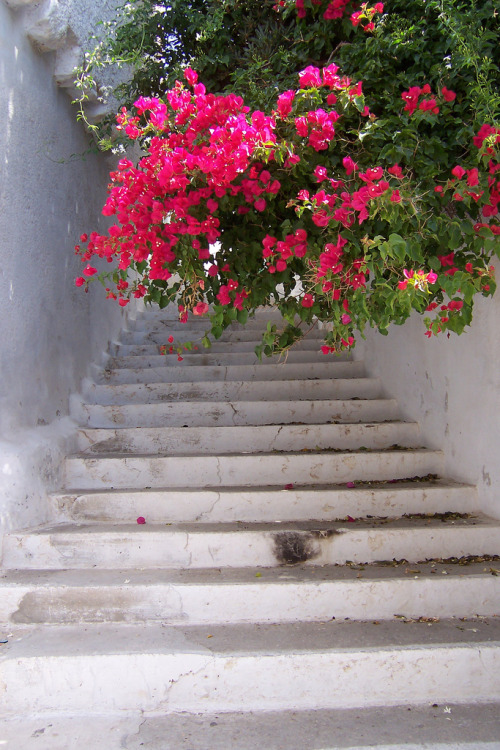aleua:  santoriniblog:  Amorgos, Greece - white-washed steps  Wow
