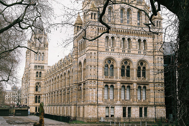 almostlikeadream:  Natural History Museum by (clareta) on Flickr.