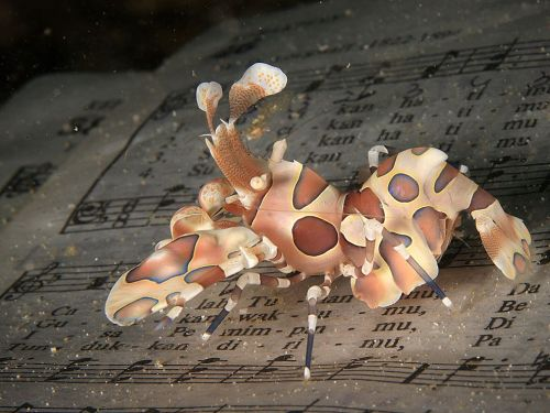 """I found this creature under the water in Lembeh Strait, Indonesia, between many pieces of garbage."" - Girts Kravalis"