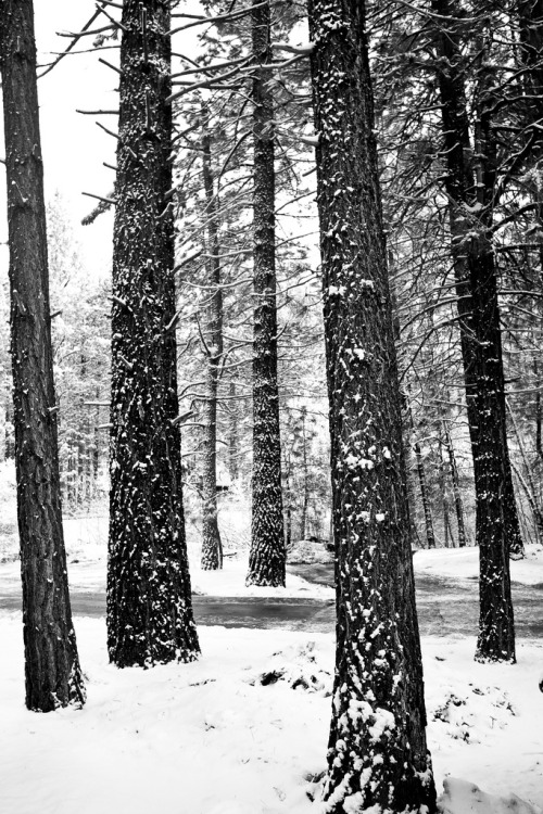 Tree & Snow (by Sunset Noir)