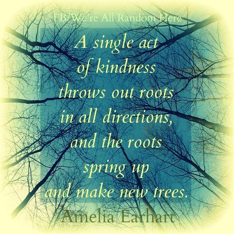 A single act of kindness throws out roots in all directions, and the roots spring up and make new trees. ~Amelia Earhart