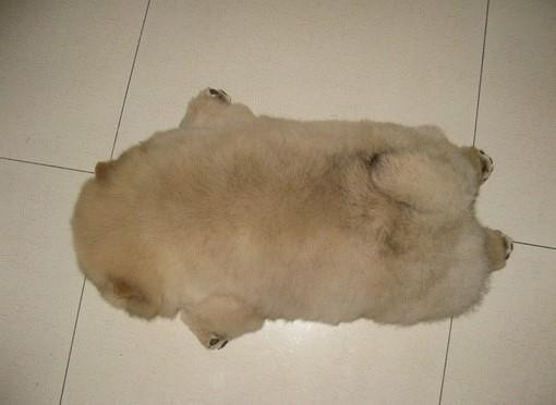 "roboradia:  gUYS"".. THIS IS THE CUTEST SLEEPING PICTURE OK"