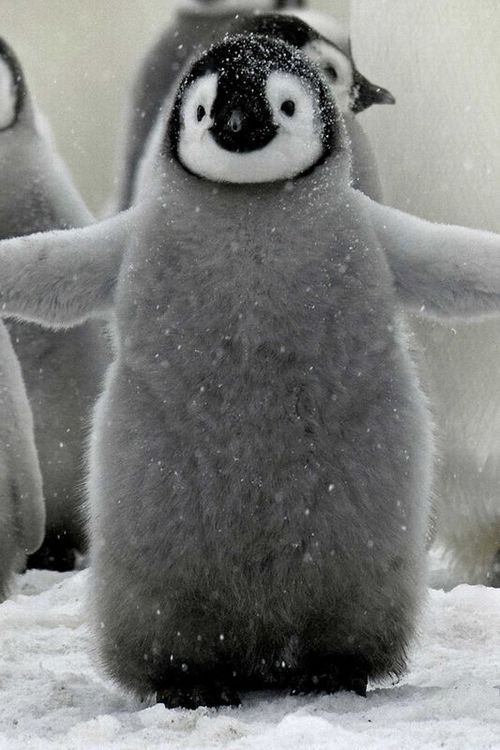 "My heart melts.thepenguinblog:  ""Well then, give us a hug!"""