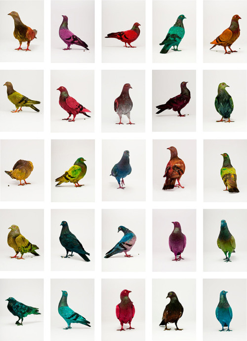 "Discover the ""Colorful Pigeons Project"" by Julian Charriere and Julius von Bismarck on Designboom."