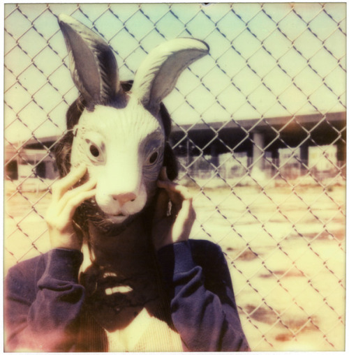 rabbit (finch) by heather on Flickr.Via Flickr: Impossible Project PX 680 Color Shade, Polaroid 680.