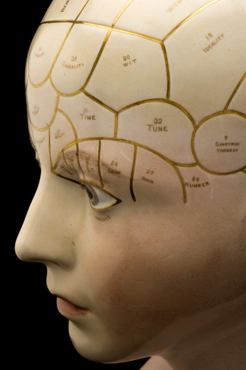 Porcelain phrenological head detail [alice]