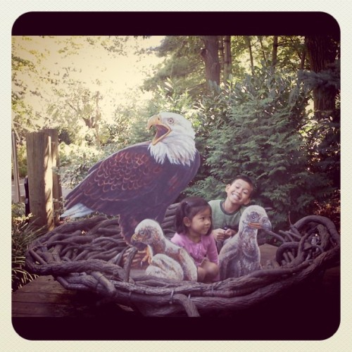 #queenszoo #birds #eagles (Taken with Instagram at Queens Zoo)