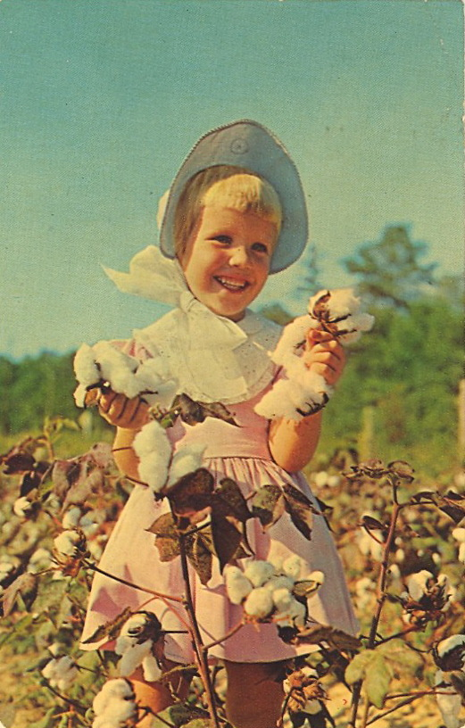 COTTON QUEENETTE  WHITE GOLD OF DIXIE August and September still find thousands of acres in the South covered with the white fleece of cotton. The open bolls are gathered by hand and machine, carried to the gin where seeds and foreign matter are removed before baling.