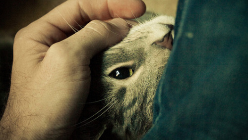 Why do cats purr?Cats purr for a variety of reasons. These comforting sounds are good for them and for us. Find out why.