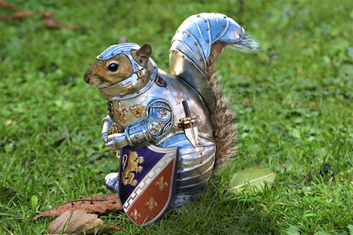 mgodp:  ampliflyahhhh:  Omg…  Sir Squirrel fights for glory, honour and nuts.
