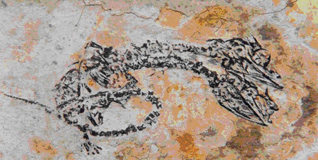 jtotheizzoe:  Two-Headed Reptile Fossil From Age of Dinosaurs Not new (it's from 2006), but tell me if you've ever seen a cooler fossil than this? This is a condition called polycephaly, that is rare, but common enough to be found regularly in reptiles. But it is infrequent enough that the odds of catching one in a fossil is pretty amazing. OK, maybe not better than the fossilized copulating turtles, but close. (via National Geographic)