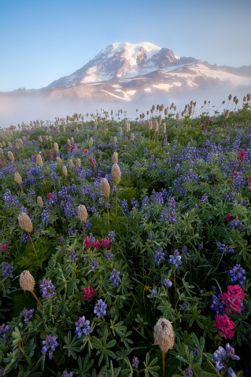 kraeyshawn:   Rainier - 2009 (by Jesse Estes)