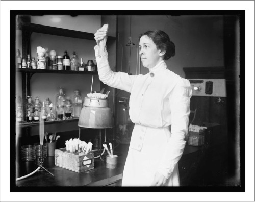 sciencechicks:  Alice C. Evans (1881-1975) Evans joined the United States Public Health Service in 1918, researching epidemic meningitis and influenza at the department's Hygienic Laboratories. That same year she demonstrated that Bacillus abortus caused the disease Brucellosis in both cattle and humans. (In 1925 she also contracted this disease and suffered from the symptoms for seven years.) Initially her results were not taken seriously (due to her gender and lack of a Ph.D.), but they were later confirmed by other scientists. This led to the pasteurization of milk in 1930, a process she had championed. Evans was also the first female president of the Society of American Bacteriologists.