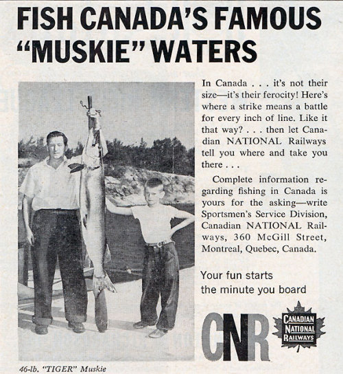 (via reservoir fishing, lake fishing, musky, vintage ads, canada | Fishing Blog & News)