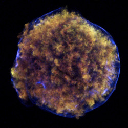 "leviathan8:  Tycho's Supernova Remnant  This new image of Tycho's supernova remnant, dubbed Tycho for short, contains striking new evidence for what triggered the original supernova explosion, as seen from Earth in 1572. Tycho was formed by a Type Ia supernova, a category of stellar explosion used in measuring astronomical distances because of their reliable brightness. Low and medium energy X-rays in red and green show expanding debris from the supernova explosion. High energy X-rays in blue reveal the blast wave, a shell of extremely energetic electrons. Also shown in the lower left region of Tycho is a blue arc of X-ray emission. Several lines of evidence support the conclusion that this arc is due to a shock wave created when a white dwarf exploded and blew material off the surface of a nearby companion star. Previously, studies with optical telescopes have revealed a star within the remnant that is moving much more quickly than its neighbors, hinting that it could be the companion to the supernova that was given a kick by the explosion. Other details of the arc support the idea that it was blasted away from the companion star. For example, the X-ray emission of the remnant shows an apparent ""shadow"" next to the arc, consistent with the blocking of debris from the explosion by the expanding cone of material stripped from the companion. This shadow is most obvious in very high energy X-rays showing iron debris  Credit: NASA/CXC/Chinese Academy of Sciences/F. Lu et al"