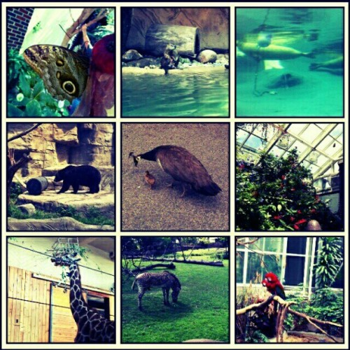 dah zoooo #detroit (Taken with Instagram)
