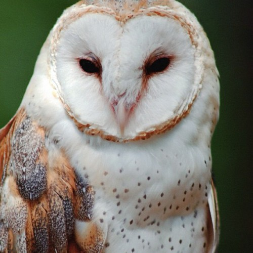 I have a true obsession with owls but if I ever saw this in real life I'd 💩 myself….  (Taken with Instagram)