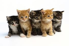 Today will be the day I rape you all with kittens. <3