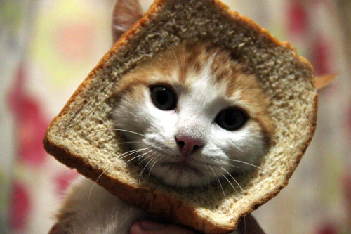 Just bready kitten