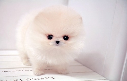 honorized:  IT'S SO FLUFFY. I WANT IT.