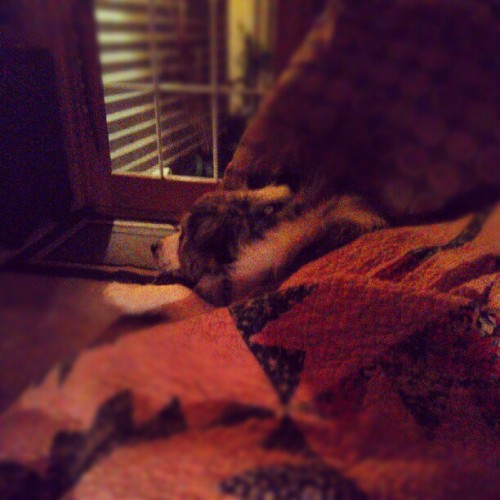 Goober sleeping on the couch (Taken with Instagram)
